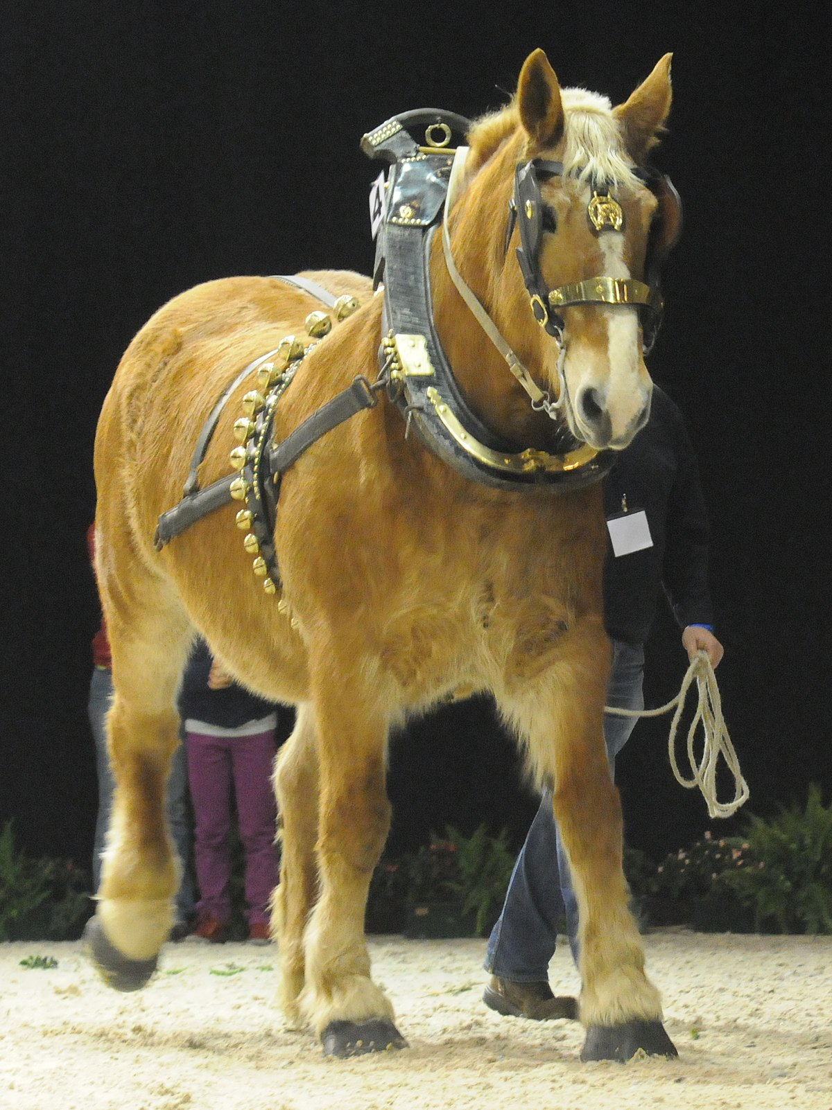 Flemish Horses & Cydesdales: Flemish Draft Horses are the Forebears of Shire Horses